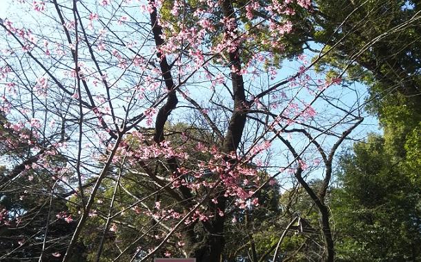 2017年3月の上野