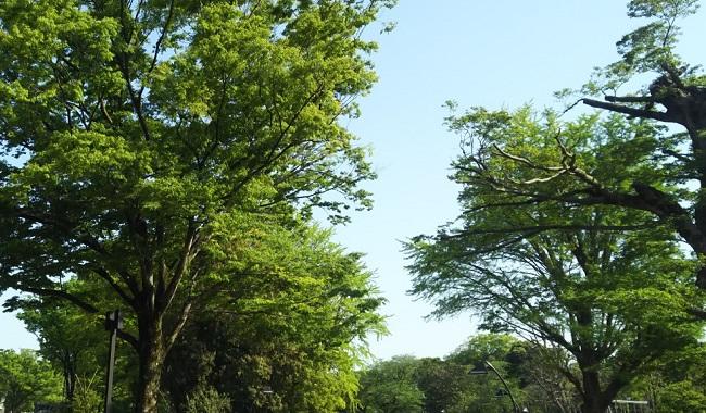 上野にある美術館と緑あふれる自然