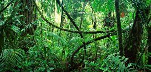 ジャングル(Jungle)