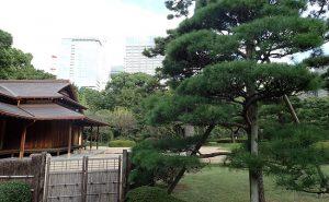 皇居東御苑を散歩!